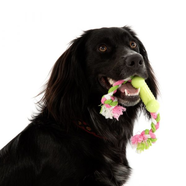 1 Toy Bone Dog Toy with Rope