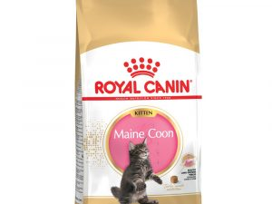 2x10kg Maine Coon Kitten Royal Canin Economy Dry Food