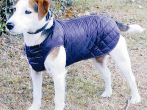 Cosipet Step In Suit Quilted Dog Rain Coat Blue 30cm / 12