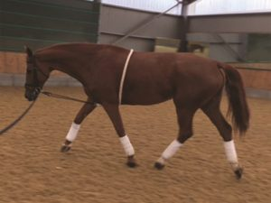 Mark Todd Full Lunging Aid Lunging Aid