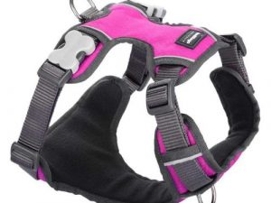 Red Dingo Padded Harness for Dogs in Hot Pink Small