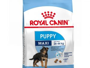 Giant Junior Active Royal Canin Dry Dog Food
